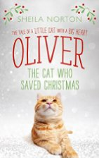 oliver-the-cat